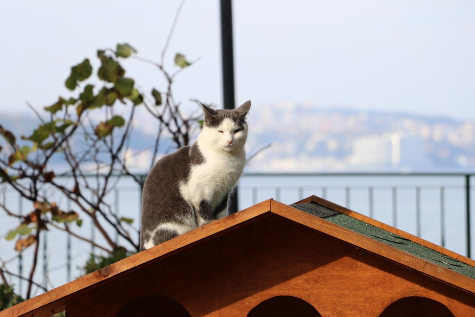 Beykoz Sokaklarına Sıcacık Kedi Evleri